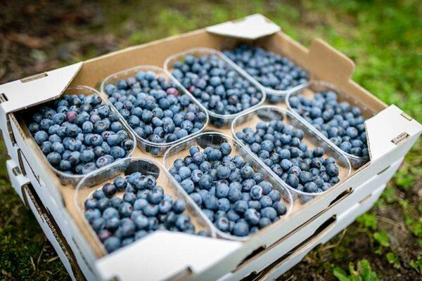 aranberry caja